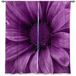 Decorative Window Treatments | Angelina Vick - Daisy Grape | Flower close up