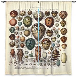 Decorative Window Treatments | Madame Memento - Eggs Collection | Nature shell books