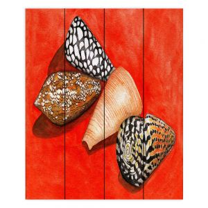 Decorative Wood Plank Wall Art | Marley Ungaro - Cone Shells | Ocean seashell still life nature