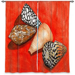 Decorative Window Treatments | Marley Ungaro - Cone Shells | Ocean seashell still life nature
