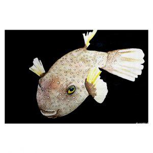 Decorative Floor Coverings | Marley Ungaro Deep Sea Life - Puffer Fish
