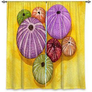 Decorative Window Treatments | Marley Ungaro - Seaurchin Shells | Ocean seashell still life nature