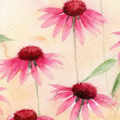 DiaNoche Designs Artist | Amanda Hawkins - Echinacea 1