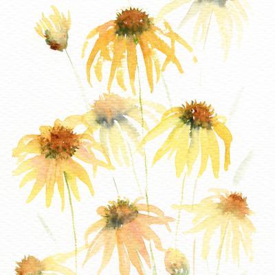 DiaNoche Designs Artist | Amanda Hawkins - Echinacea 2