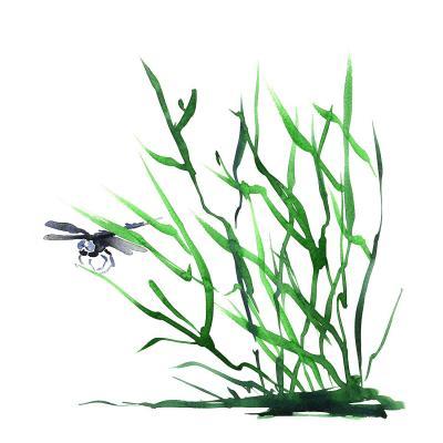 DiaNoche Designs Artist | Brazen Design Studio - Dragonfly Grass