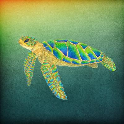 DiaNoche Designs Artist | Catherine Holcombe - Syndney Seaturtle