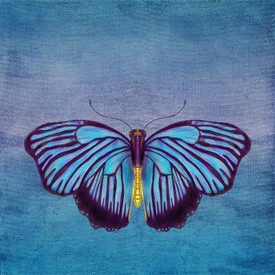 DiaNoche Designs Artist | Catherine Holcombe - Butterfly Blues
