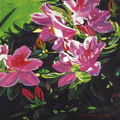DiaNoche Designs Artist | David Lloyd Glover - Azaleas Dew Drop