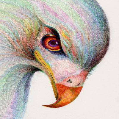 DiaNoche Designs Artist   Gerry Segismundo - Raptors Watchful Eye