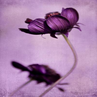 DiaNoche Designs Artist | Iris Lehnhardt - Purple Blossoms