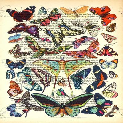 DiaNoche Designs Artist   Madame Memento - Butterflies Collection
