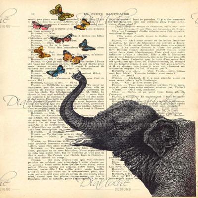 DiaNoche Designs Artist | Madame Memento - Elephant Butterflies