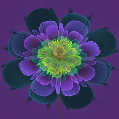 DiaNoche Designs Artist | Pam Amos - Ghost Flower Purple Yellow