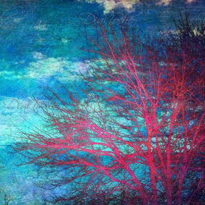 DiaNoche Designs Artist | Sylvia Cook - Abstract Tree II