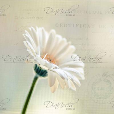 DiaNoche Designs Artist | Sylvia Cook - Daisy