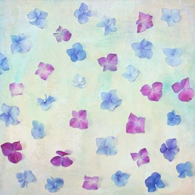 DiaNoche Designs Artist | Sylvia Cook - Hydrangea Petals