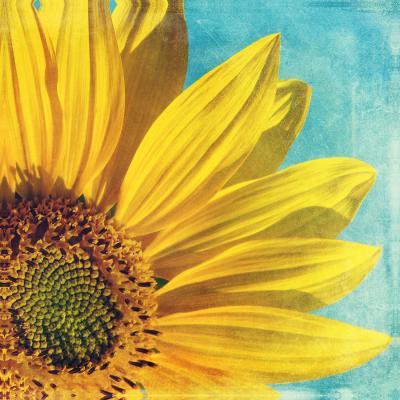 DiaNoche Designs Artist | Sylvia Cook - Pure Sunshine