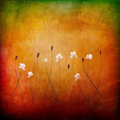 DiaNoche Designs Artist | Tara Viswanathan - Summer Dreams