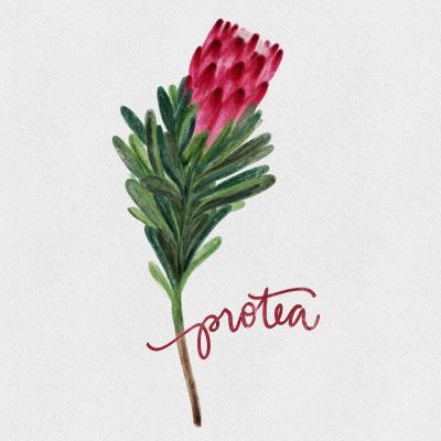 DiaNoche Designs Artist | Noonday Design - Protea Flower